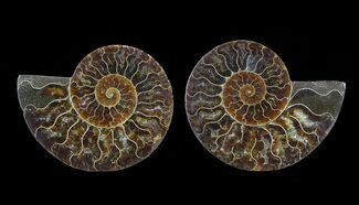 "4.8"" Cut & Polished Ammonite Pair - Agatized For Sale, #64976"