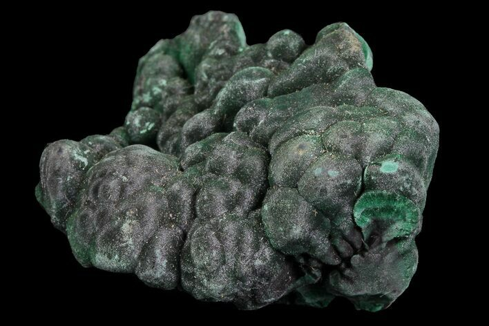 "1.4"" Botryoidal Malachite Crystal Formation - Congo"