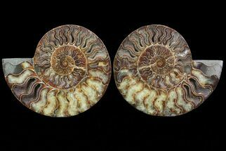 "Buy 8.7"" Cut & Polished Ammonite Pair - Agatized - #67903"
