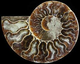"Buy 3.3"" Agatized Ammonite Fossil (Half)  - #68824"