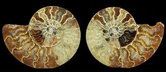 "Bargain, 4.9"" Cut & Polished Ammonite Pair - Agatized For Sale, #69026"