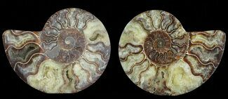 "Buy 6.4"" Cut & Polished Ammonite Pair - Agatized - #69025"