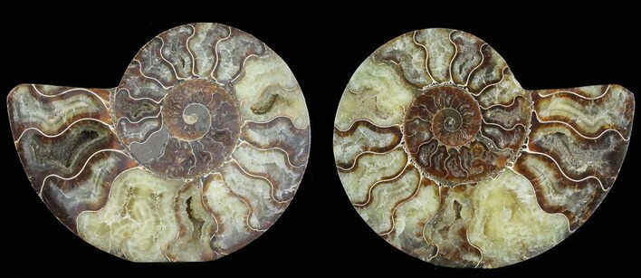 "6.4"" Cut & Polished Ammonite Pair - Agatized"