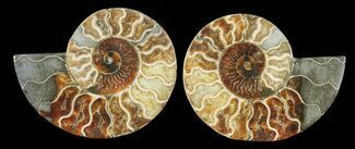 "Buy 5.8"" Cut & Polished Ammonite Pair - Agatized - #69013"