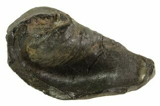 Whale (Unknown Species) - Fossils For Sale - #69672
