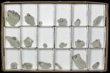 Wholesale: Lot of Blastoid Fossils On Shale - 18 Pieces  - #70897-1