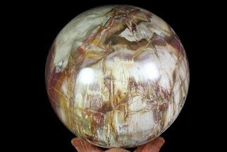 "Buy Bargain, 4.3"" Colorful Petrified Wood Sphere - Madagascar - #71431"