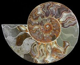 "Buy Bargain, 6.8"" Cut Ammonite Fossil (Half) - Agatized - #71053"