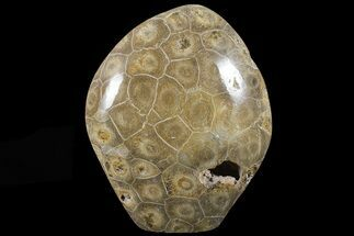 "4.5"" Free-Standing Polished Fossil Coral (Hexagonaria) Display For Sale, #69356"