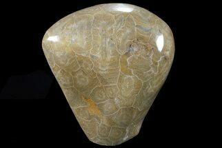 "Buy 4.5"" Free-Standing Polished Fossil Coral (Hexagonaria) Display - #69358"