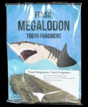"Buy Real Fossil Megalodon Partial Tooth - 4""+ Size - #72613"