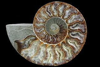 "Buy 4.7"" Polished Ammonite Fossil (Half) - Agatized - #72937"