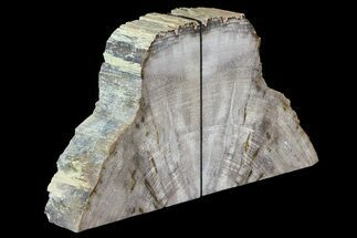 "Buy 5.8"" Tall, Palm Petrified Wood Bookends - Burma - #74014"