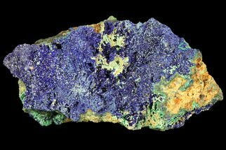 "2.5"" Sparkling Azurite and Malachite Crystal Cluster - Morocco For Sale, #74378"