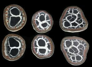 Buy Bulk Small Cut and Polished Septarian Nodules - 5 pack - #75595
