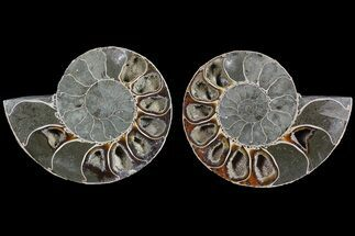 "Buy 2.85"" Cut & Polished Ammonite (Anapuzosia?) Pair - Madagascar - #77323"