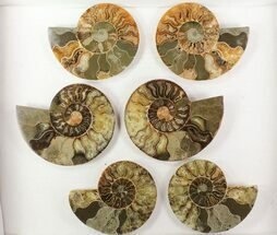 "Wholesale: 4 1/2 - 5"" Cut Ammonite Pairs (Grade B) - 10 Pairs For Sale, #77336"