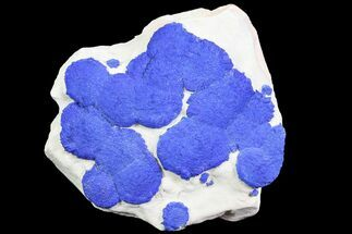 "Buy 3.9"" Brilliant Blue Azurite Sun Cluster On Rock - Australia - #77308"