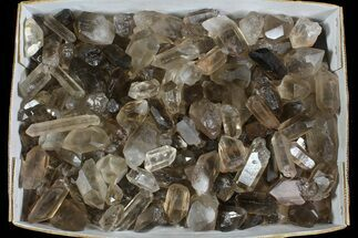 "Wholesale Lot: 23 Lbs Smoky Quartz Crystals (2-4"") - Brazil For Sale, #77825"
