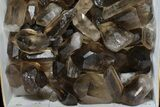 "Wholesale Lot: 23 Lbs Smoky Quartz Crystals (2-4"") - Brazil - #77828-2"