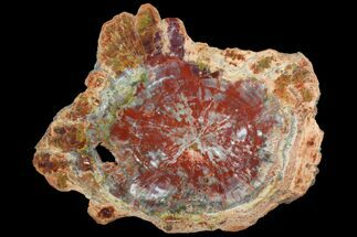 "Beautiful, Red Arizona Petrified Wood Slab - 22.3"" For Sale, #78143"