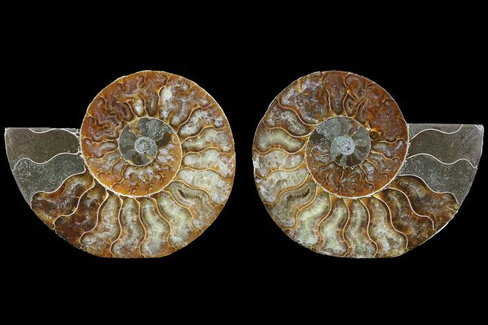 "4.4"" Cut & Polished Ammonite Fossil - Agatized"