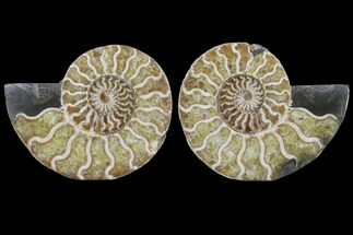 "Buy 4.3"" Cut & Polished Ammonite Pair - Agatized - #78553"