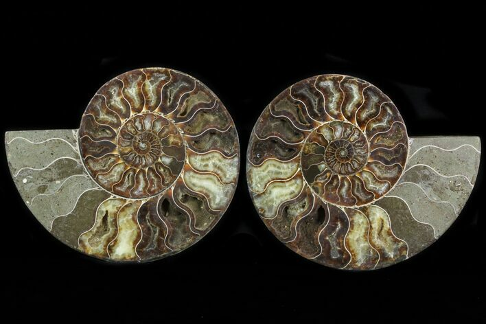 "8.2"" Cut & Polished Ammonite Pair - Agatized"