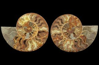 "7.6"" Cut & Polished Ammonite Pair - Agatized For Sale, #78332"