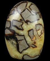 Septarian - Fossils For Sale - #79098
