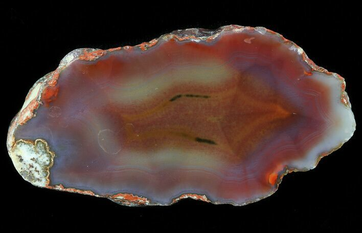 "2.7"" Beautiful Condor Agate From Argentina - Cut/Polished Face"