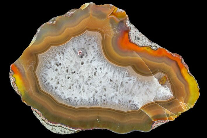 "3"" Beautiful Condor Agate From Argentina - Cut/Polished Face"