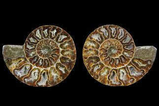 "Buy 3"" Cut & Polished Ammonite Pair - Agatized - #78388"