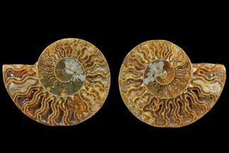 "Buy 2.95"" Cut & Polished Ammonite Fossil - Agatized - #78361"