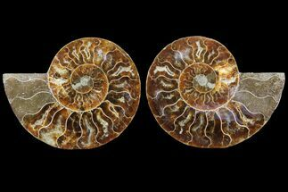 "3.7"" Cut & Polished Ammonite Fossil - Agatized For Sale, #78365"