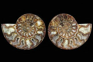 "4.7"" Cut & Polished Ammonite Pair - Agatized For Sale, #78581"