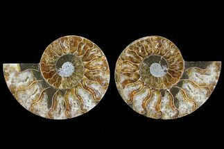 "Buy 3.25"" Cut & Polished Ammonite Fossil - Agatized - #78382"