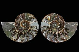 "5.3"" Cut & Polished Ammonite Pair - Crystal Lined Chambers For Sale, #78566"
