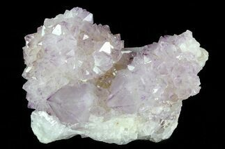 "Buy 3.4"" Cactus Quartz (Amethyst) Cluster - South Africa - #80011"