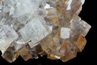 "3.2"" Lustrous Clear Cubic Fluorite Crystals - Morocco For Sale, #80267"
