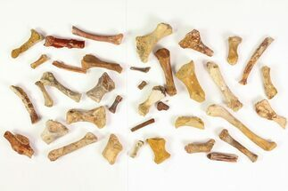 Various Dinosaurs & Reptiles - Fossils For Sale - #81606