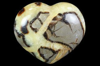 Septarian - Fossils For Sale - #82053