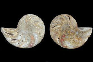 "2.5"" Cut & Polished Nautilus Pair - Madagascar For Sale, #82127"
