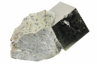 Pyrite - Fossils For Sale - #82080