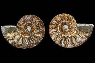 "Buy 3.1"" Cut & Polished Ammonite Fossil - Agatized - #82270"