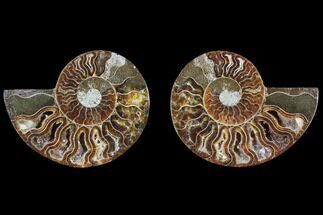 "Buy 2.9"" Cut & Polished Ammonite Pair - Agatized - #82276"