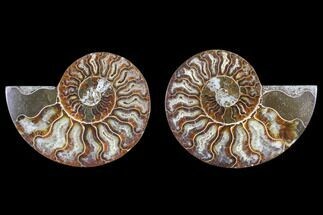 "3.3"" Cut & Polished Ammonite Fossil - Agatized For Sale, #82310"