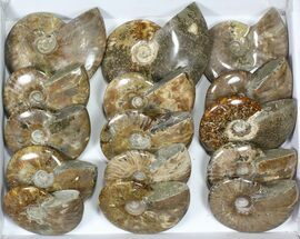 "Buy Wholesale Lot: 4.5 to 6"" Polished Ammonite Fossils - 15 Pieces - #82657"