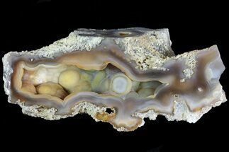 "4.1"" Agatized Fossil Coral Geode - Florida For Sale, #82815"