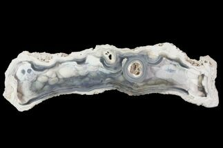"5.6"" Agatized Fossil Coral Geode - Florida For Sale, #82824"